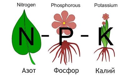 Важные для растений макроэлементы