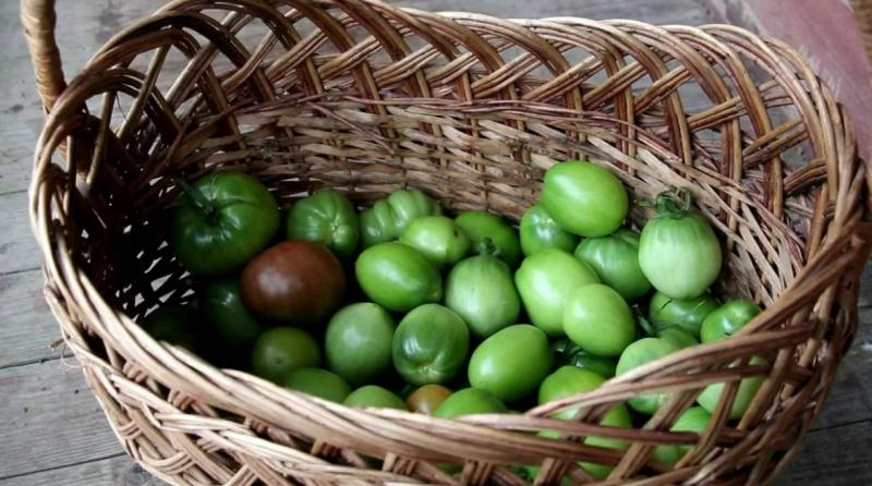 Где и как хранить зеленые помидоры, чтобы они покраснели: место, тара, правильные «ускорители» процесса дозревания