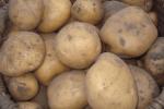 Картофель Болвинский