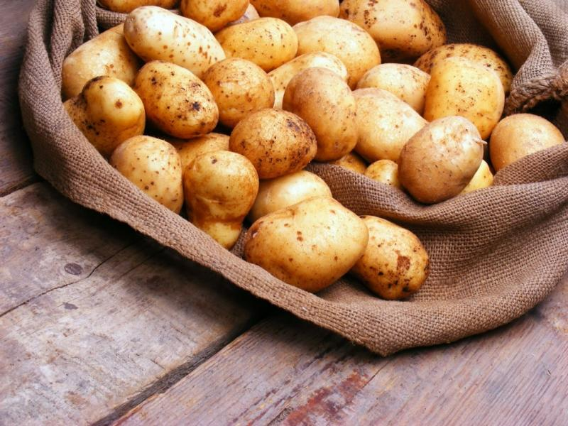 Описание сортов картофеля для Урала и Сибири