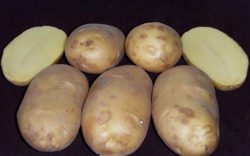 Картофель Чароит