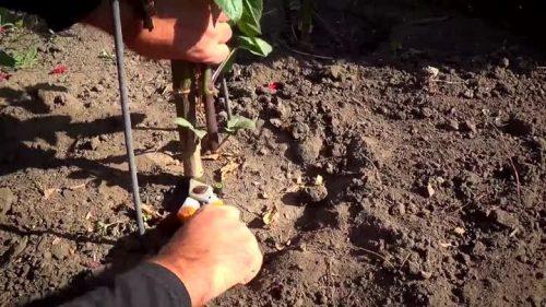 Обрезка стеблей