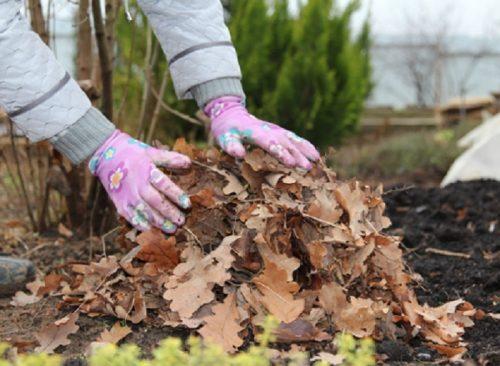 Мульчирование опавшей листвой