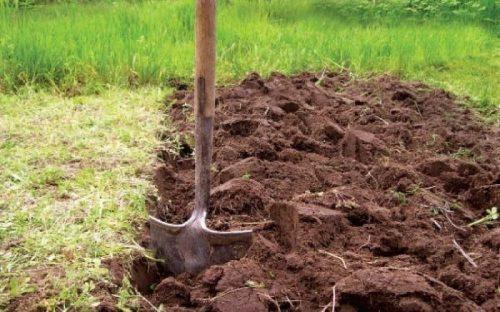 Подготовка участка к посадке картофеля