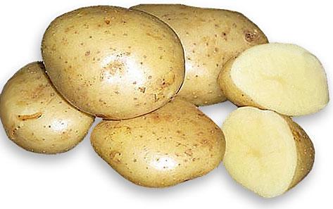 Корнеплоды картофеля Удача
