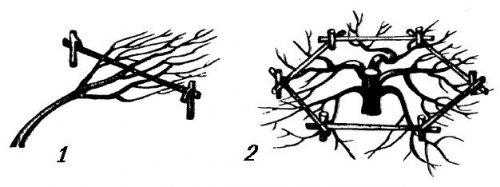 Стланцевые формы деревьев