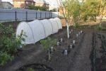 Небольшое укрытие для растений