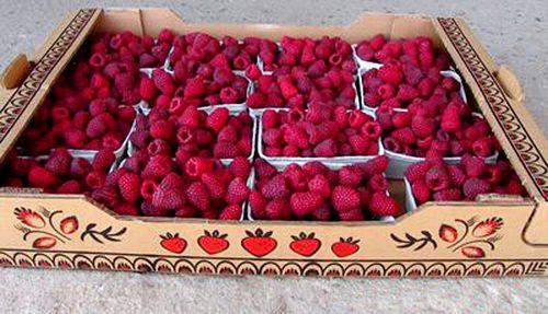 Собранные ягоды Польки