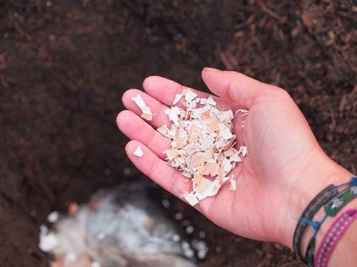 Яичная скорлупа — удобрение для дерева