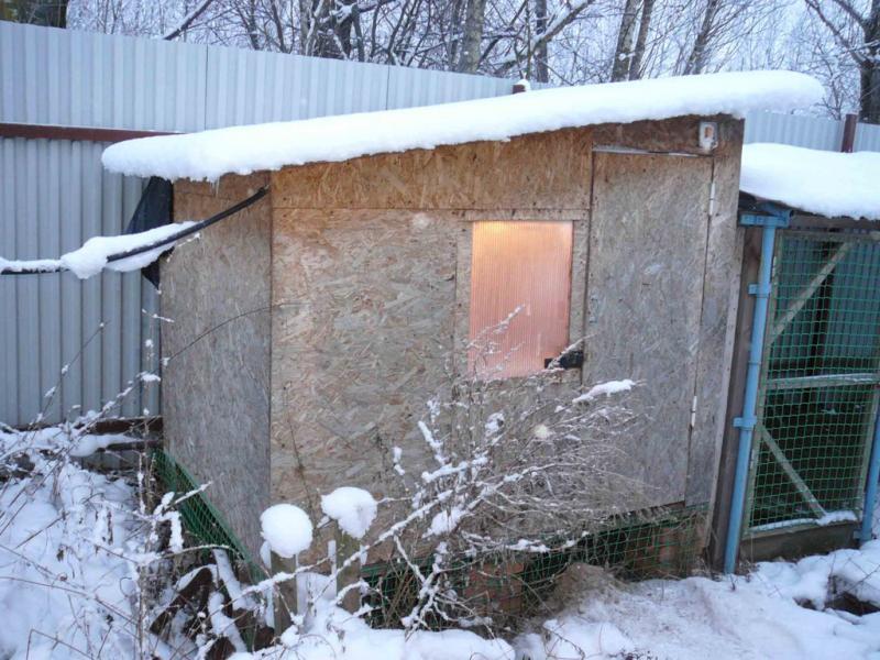 Как построить тёплый курятник на зиму своими руками