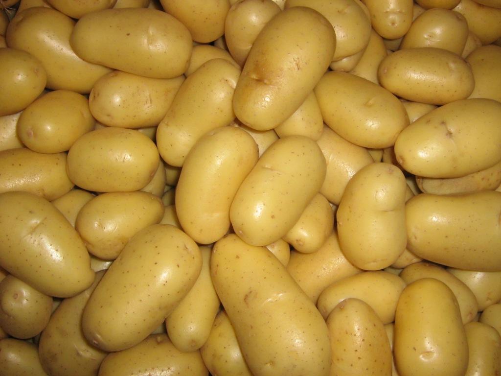 Характеристика и описание сорта картофеля скарб