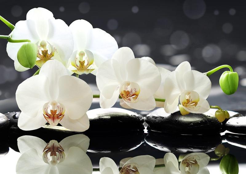 Можно ли держать дома Орхидею{q}