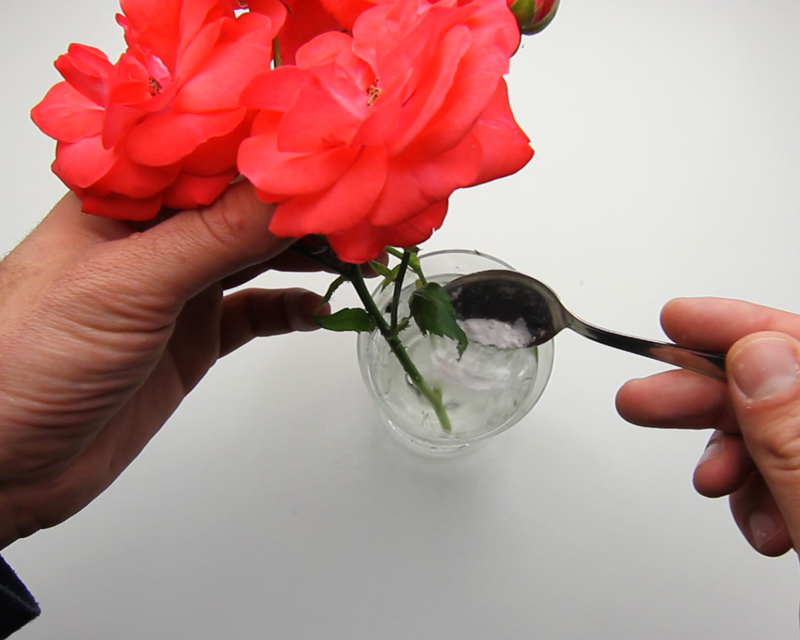 Уход за букетом из роз
