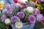 Декоративная капуста в цветочном магазине