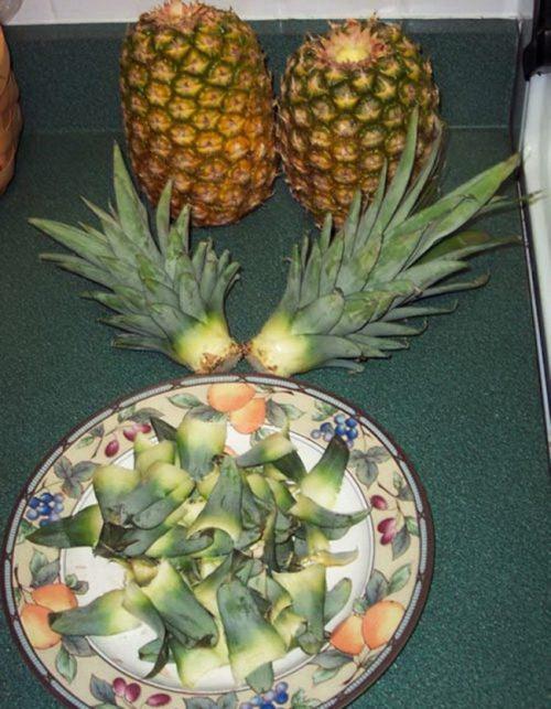 Отделённая верхушка ананаса