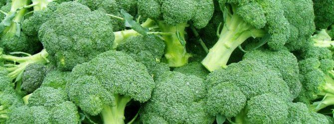 Кладезь витаминов – брокколи