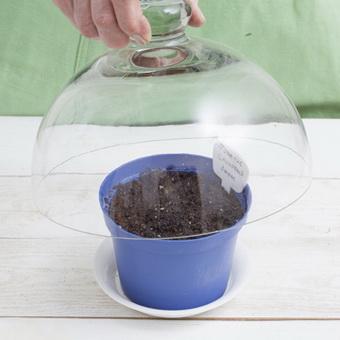 Создание для семян парникового эффекта