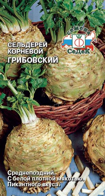 Сельдерей Грибовский