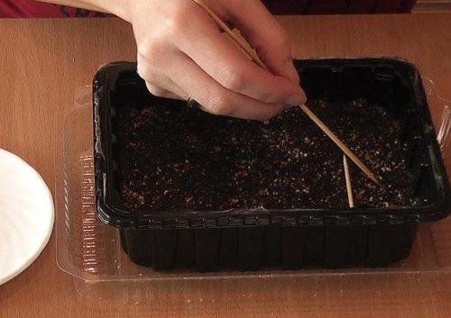 Вдавливание семян в грунт