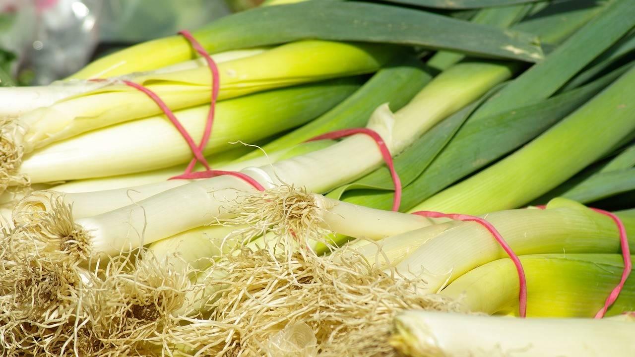 Как выращивать лук порей в открытом грунте