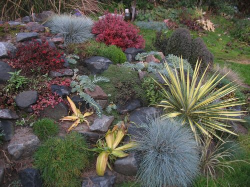 Юкка садовая в ландшафтном дизайне