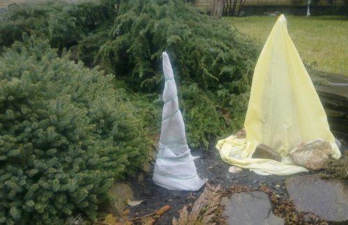 Укрытие для садовой юкки на зиму