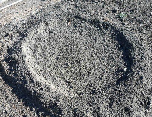 Лунка для посева семян арбуза в открытый грунт