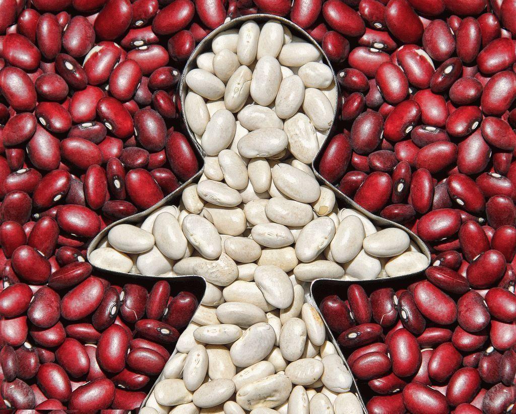 Выращивание фасоли в открытом грунте, а также уход за ней в теплице и в домашних условиях