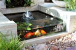 рыбки и фонтан