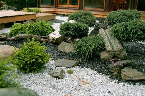 Вечнозелёные растения в рокарии