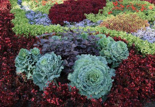 Композиции с декоративной капустой