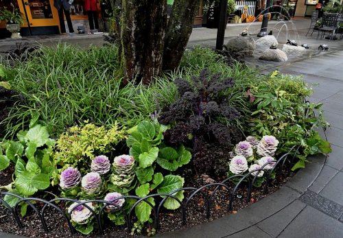 Декоративная капуста в ландшафтном дизайне
