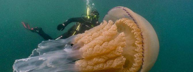 фото медузы