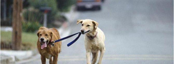 побег собак