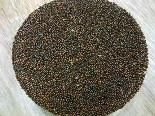 Семена щипицы