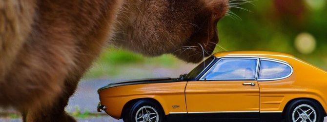 кошка и машина