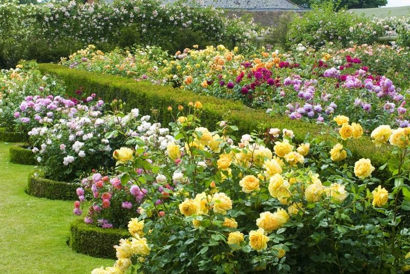 Когда лучше сажать розы в открытый грунт весной – факты, подкрепленные практикой