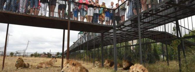зоопарк Тайган