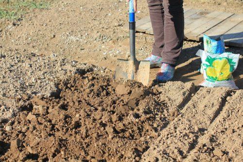 Подготовка грядки к высадке чеснока