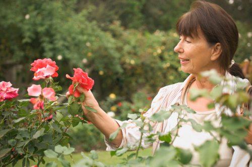 Осмотр розовых кустов