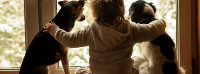 любовь к животных