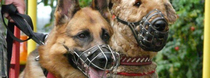 собаки в наморднике