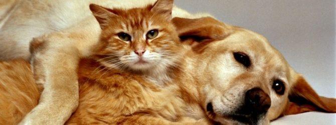 пёс и кот лежат