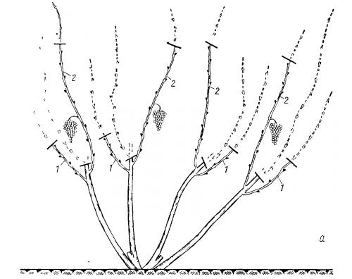 Обрезка винограда осенью, схема