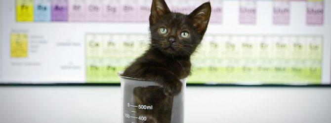 кот в лаборатории