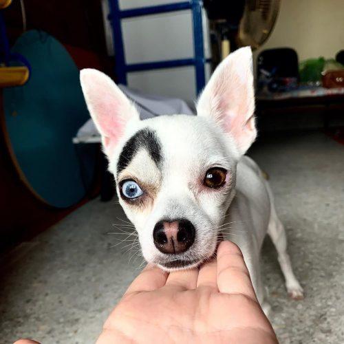 Собака с необычным окрасом