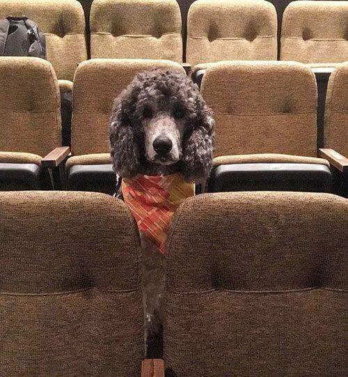 Собака в кино