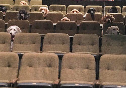 собаки в кино