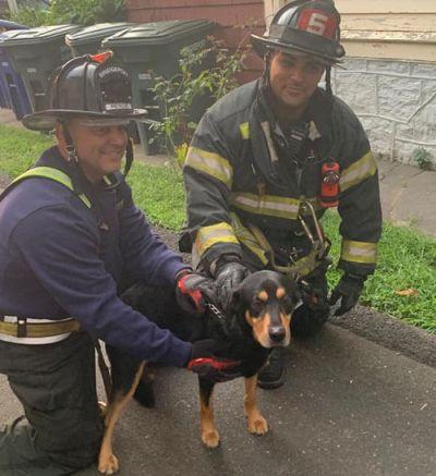 пёс и спасатели