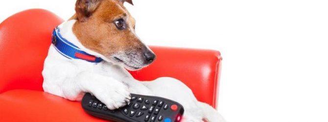 пёс перед телевизором